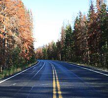 down that winding road by Chloe  Pruse