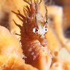 I Heart Seahorse. by James Peake Nature Photography.
