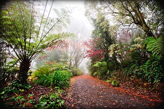 Autumn Path by Melinda Kerr