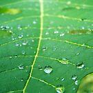 Leaf by theblackazar
