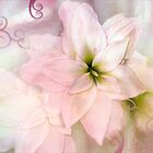 Amaryllis Dream by Carmen Holly