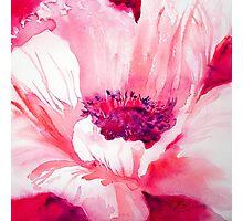 Pink Poppy Photographic Print