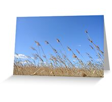 Reeds Moved by the Wind Greeting Card