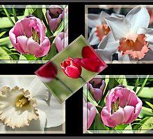 Flower Collage 1 by Teresa Zieba