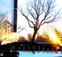 Spot Light on the Tree by Valerie McCray