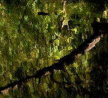 Green reflections on the lake by Celeste Mookherjee