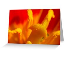 Tulip Macro Greeting Card