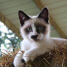 In The Hay by Karen Kaleta