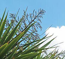 Manx Palm by WatscapePhoto
