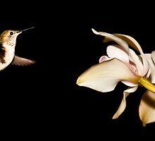 Must Find Nectar by Josh Dayton