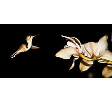Must Find Nectar Photographic Print