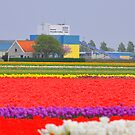 United Colours of Bloom by Gaurav Dhup