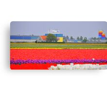 United Colours of Bloom Canvas Print