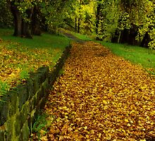"""Autumn Path"" by Phil Thomson IPA"