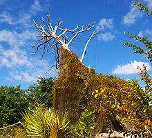 Natural Preserve park in Deerfield Beach, Florida by coralZ