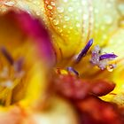 Macro Freesia by RA-Photography