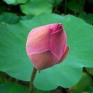 Pink Bud by Ryan Bird