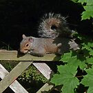 Time Out - The Sunbather Squirrel by Margie Avellino