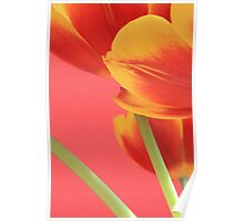 Pastel Tulips Poster