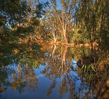 Bush Reflections - Mulwala by David Hunt