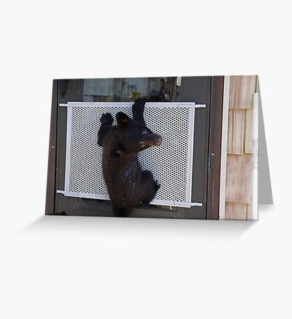 Little Bear - Big Trouble Greeting Card