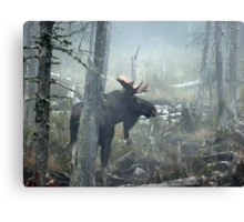 Bull Moose In Morning Mist Canvas Print