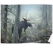 Bull Moose In Morning Mist Poster
