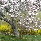 Magnolia Tree by mooselandtours