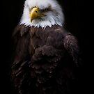 American Eagle by Sharon Morris