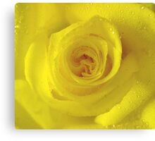 *YELLOW ROSE* Canvas Print