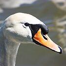 swan by wendywoo1972
