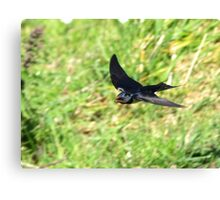 One Swallow Does Not a Summer Make Canvas Print