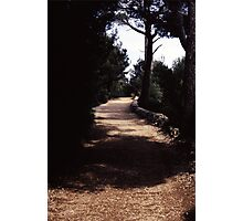 Road of life Photographic Print