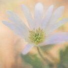 Spring Flower by KathleenRinker