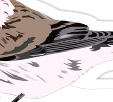 Illustration - Artic Redpoll - Bird Sticker