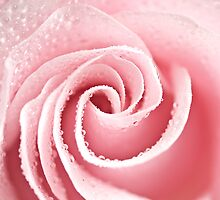 Elegant Rose by Lori411