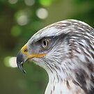 Eagle by Hans Bax