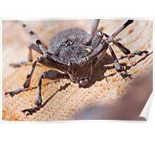 Timberman Beetle Poster