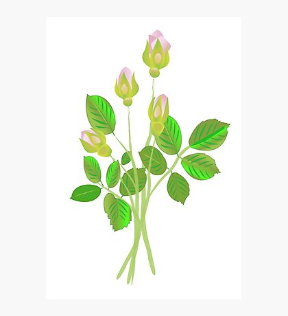 Four Rose Buds Photographic Print