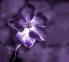 Purple Majesty by CarolM