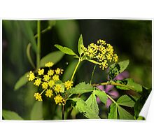 Wild Flower Yellow Poster