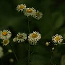 Wild Flowers by Rick  Friedle