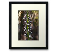 Totem pole of Oysters Framed Print