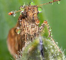 Eye Dew (3) ! by robkal