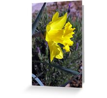 Silent Trumpet ~ The Daffodil Greeting Card