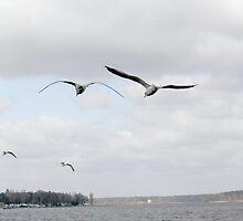 Berlin seagulls by Tanja Katharina Klesse
