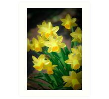 Spring flowers - narcissus Art Print