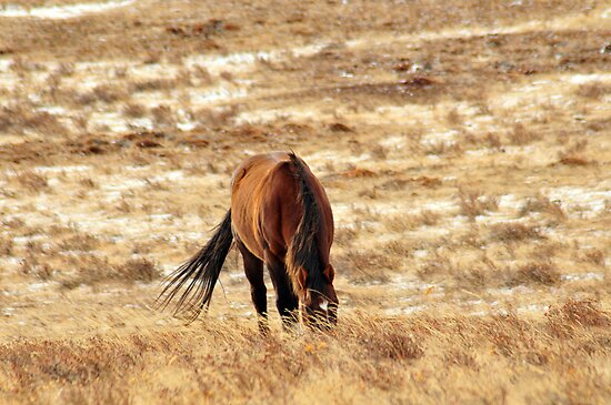 Little Horse on the Prairie by Donna Ridgway
