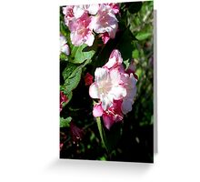 Spring Pinks - Carnival Wigelia 3 Greeting Card