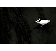 Egret in the Arno Photographic Print
